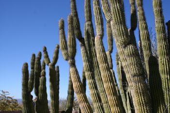 cactusforest.jpg