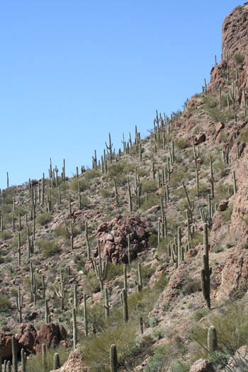 cactushill.jpg