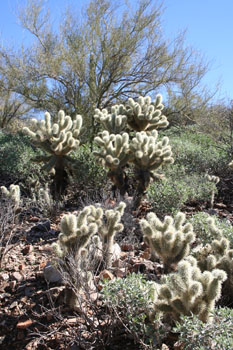 furrycactusforest.jpg